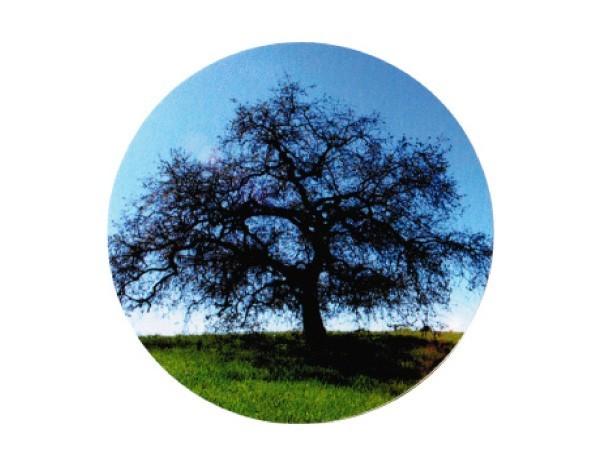 """SKY272 Root Concepts 3"""" """"Still Tree"""" Sticker"""